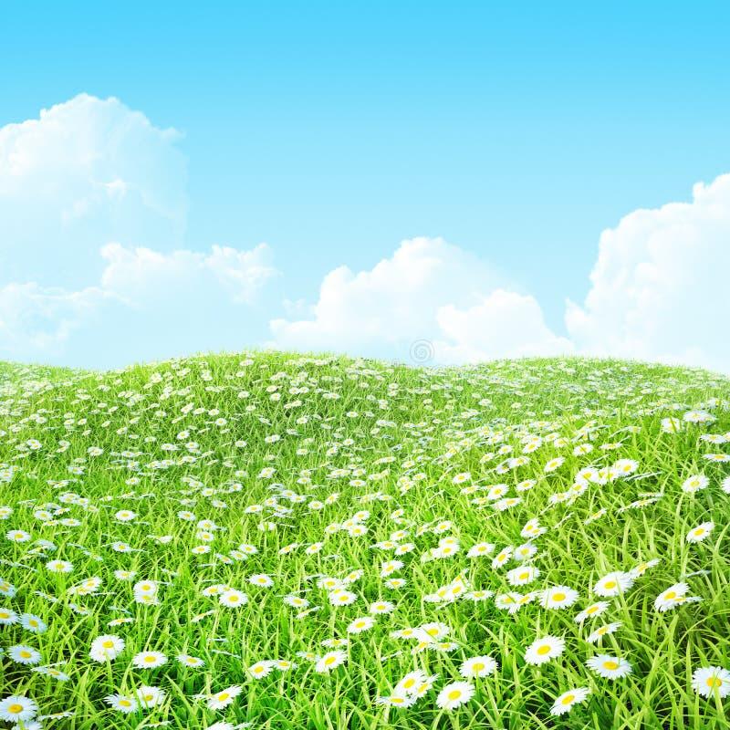 Lato błyszcząca kolorowa łąka z chamomile. fotografia royalty free