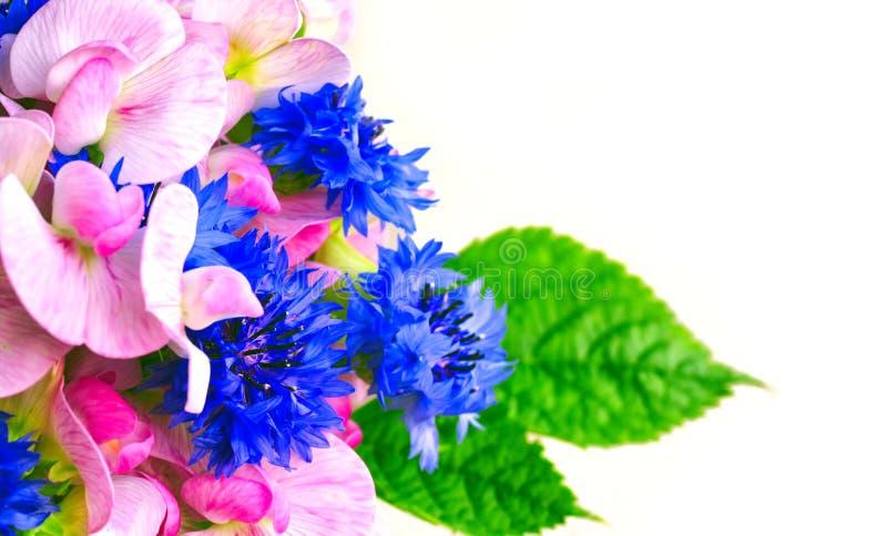 Lato bukieta fragrant cornflowers i słodcy grochy obraz stock