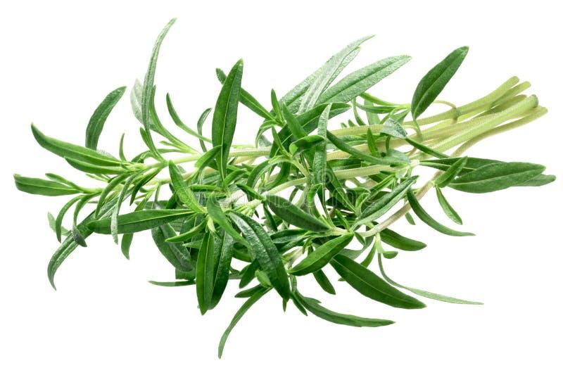 Lato cząberu Satureja hortensis plik, ścieżki zdjęcia royalty free