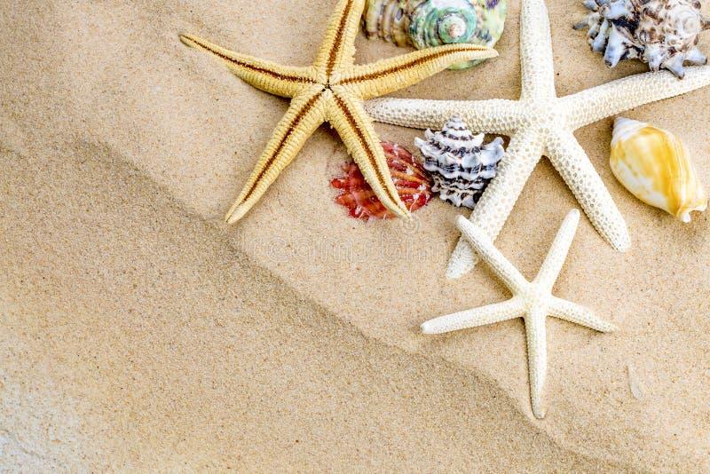 Lato czasu pojęcie z morze rozgwiazdą na piasku i skorupami obraz stock