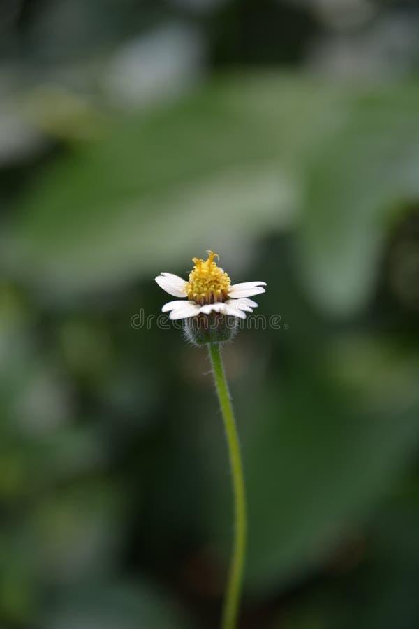 Lato del fiore fotografie stock libere da diritti
