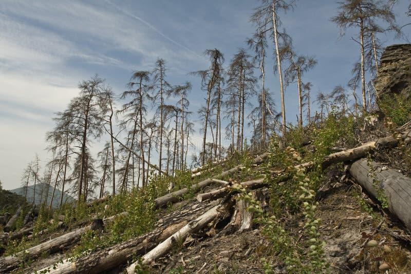 Lato della collina con gli alberi rotti immagini stock libere da diritti