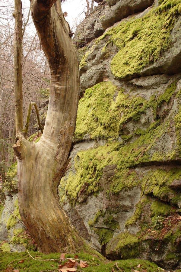 Lato della parete della roccia con muschio immagine stock