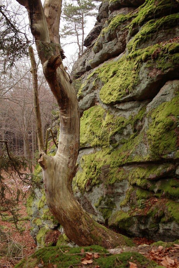 Lato della pietra con muschio fotografie stock libere da diritti