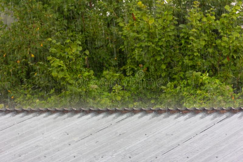 Lato deszcz na tle zielony ulistnienie obraz royalty free