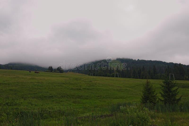 Lato deszczowy dzień Krajobraz w górach z koniami i ciężką mgłą przy tłem Zakarpattya, Ukraina zdjęcia royalty free