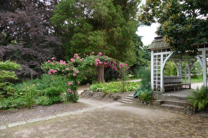 Lato dom z ładnymi różami obraz royalty free