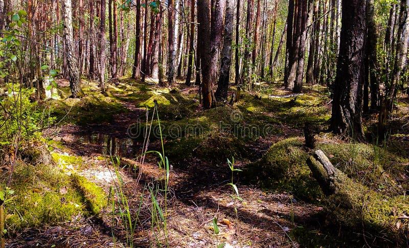 Lato Forrest zdjęcie stock