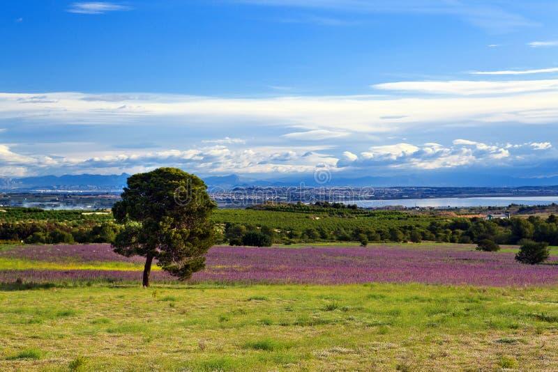 Lato hiszpański krajobraz zdjęcie stock