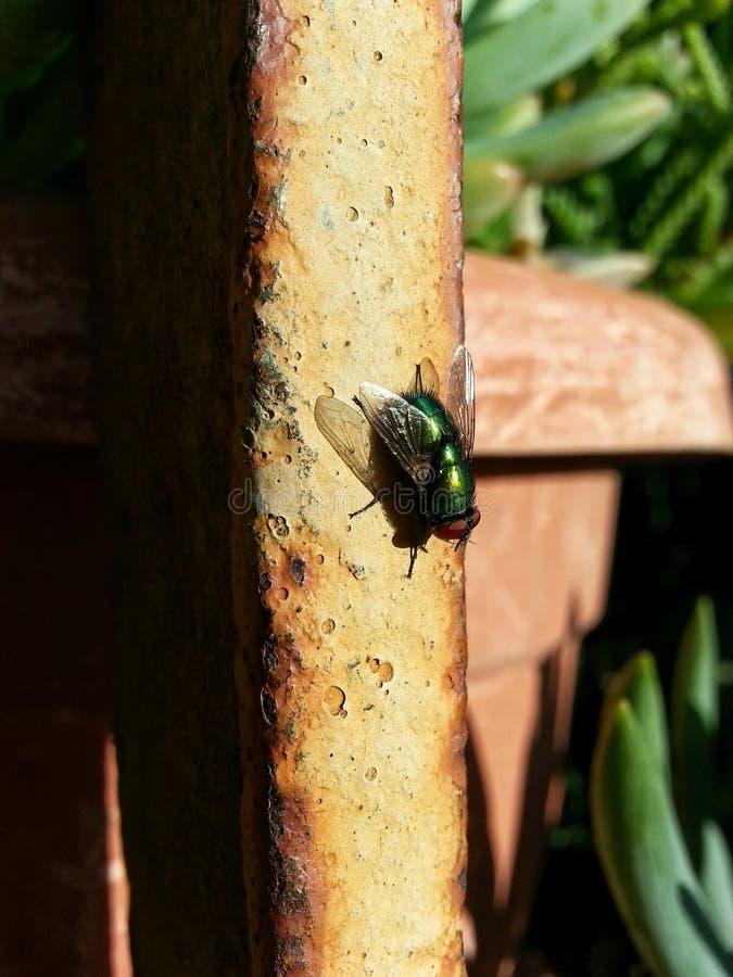 Lato insekty zdjęcie stock