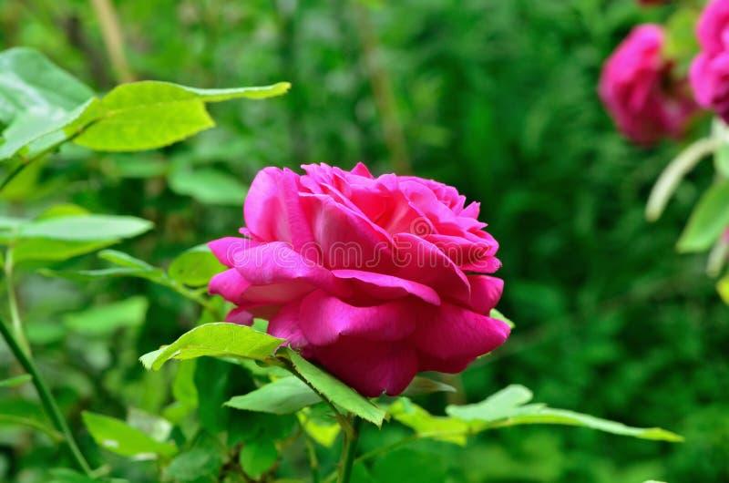 Lato jaskrawi kwiaty słoneczny dzień fotografia stock