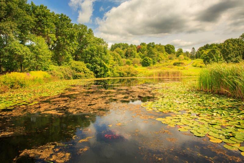 Lato jezioro obrazy stock