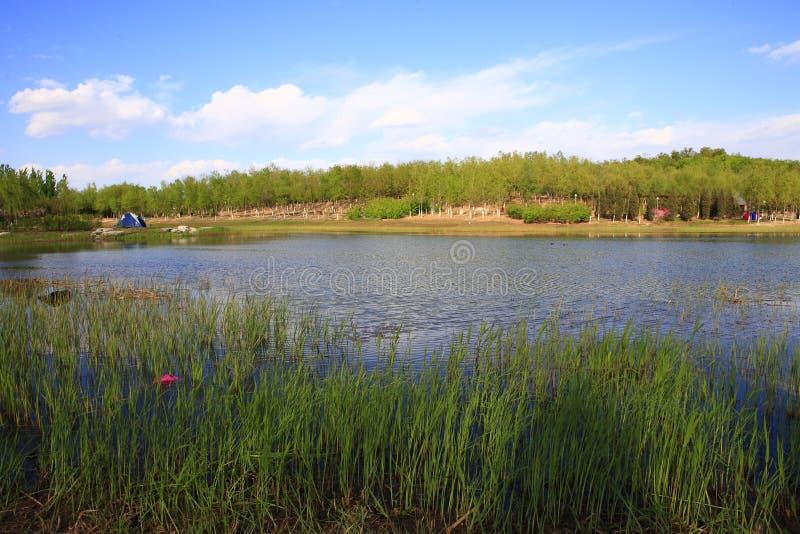 Lato jezioro obraz royalty free