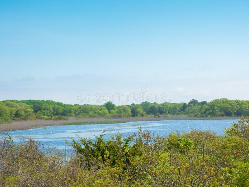 Lato krajobraz jezioro w Virginia plaży, usa obraz royalty free
