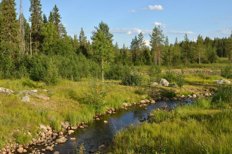 LATO krajobraz Lasowa rzeka w Fińskim Lapland zdjęcie royalty free