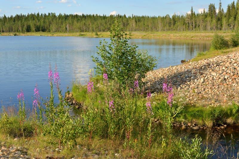 LATO krajobraz Lasowy jezioro w Fińskim Lapland obraz stock