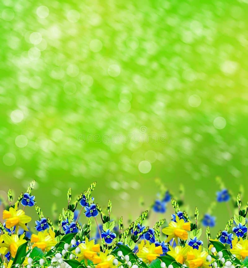 LATO krajobraz lily charakteru rosyjski nieznane doliny świat narcyz obrazy stock