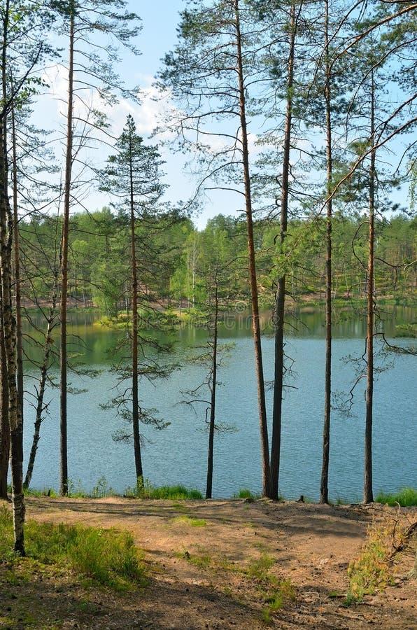 Lato krajobraz na jeziorze zdjęcie royalty free