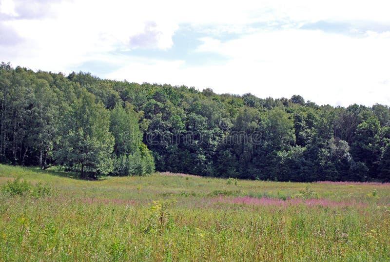 LATO krajobraz Odpowiada kropkowanego z wildflowers i zwartym lasem na Pogodnym ciepłym dniu, zdjęcie stock