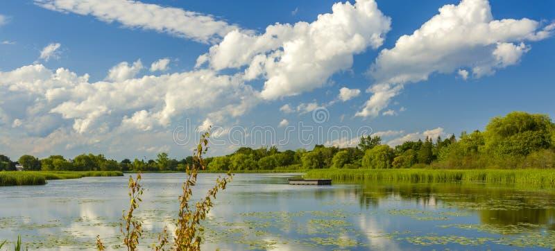 Lato krajobraz park na brzeg staw fotografia royalty free