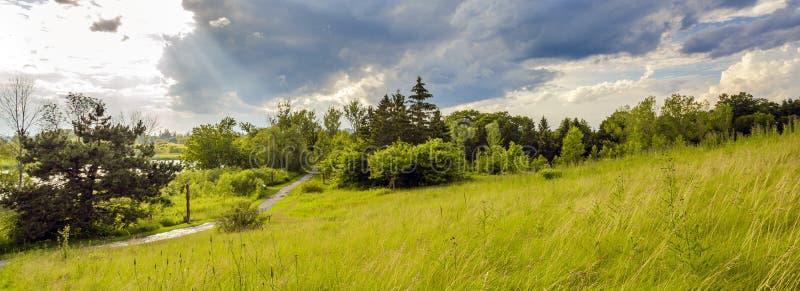 Lato krajobraz park na brzeg staw zdjęcia stock