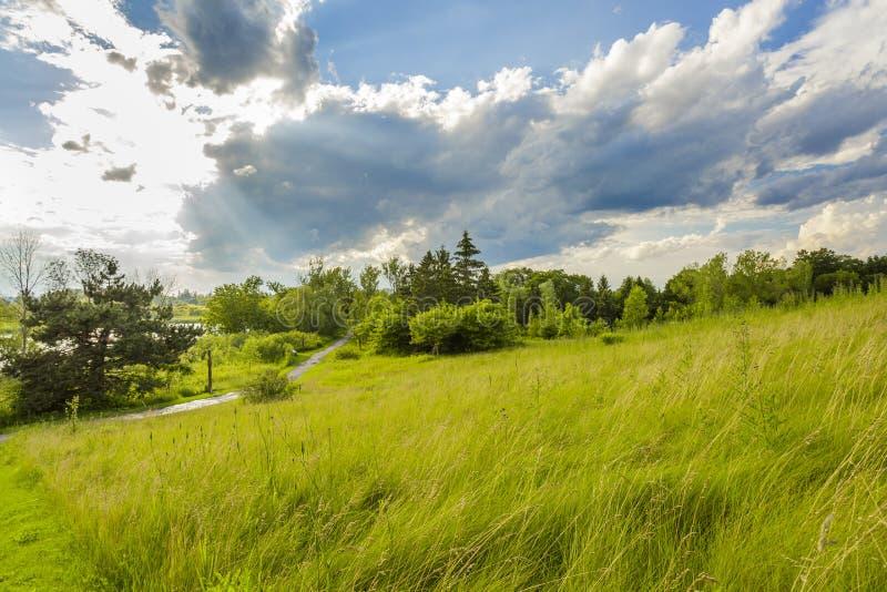 Lato krajobraz park na brzeg staw zdjęcia royalty free