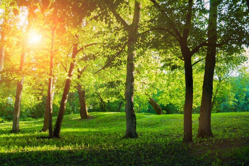 Lato krajobraz, lato park w pogodnej pogodzie przy zmierzchem fotografia stock