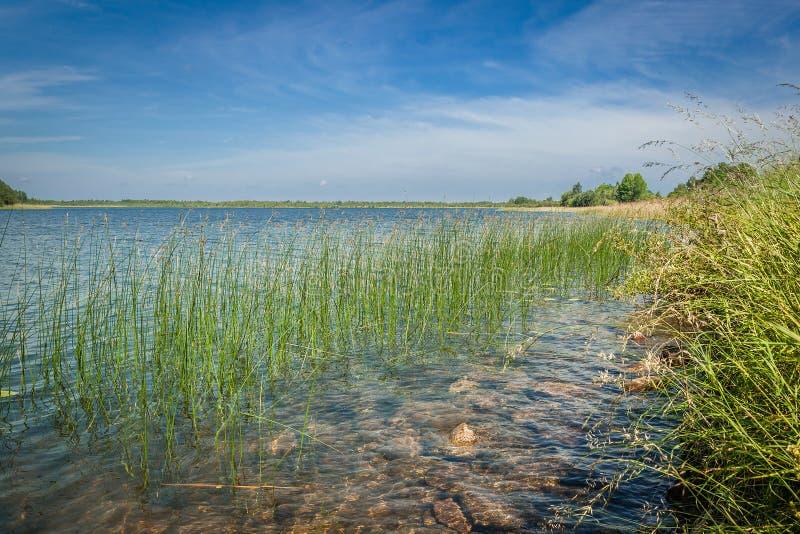 LATO krajobraz porosły trawy wybrzeże jezioro płytka woda z skałami na trawie i dnie fotografia royalty free