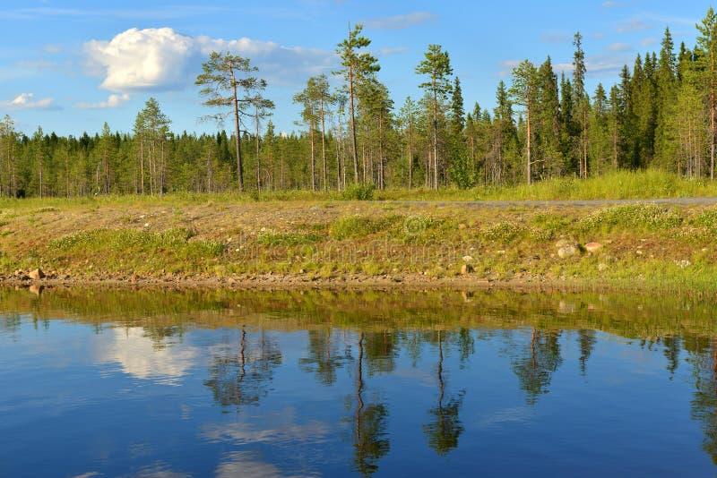 Lato krajobraz w Fińskim Lapland Północny Lasowy jezioro zdjęcie royalty free