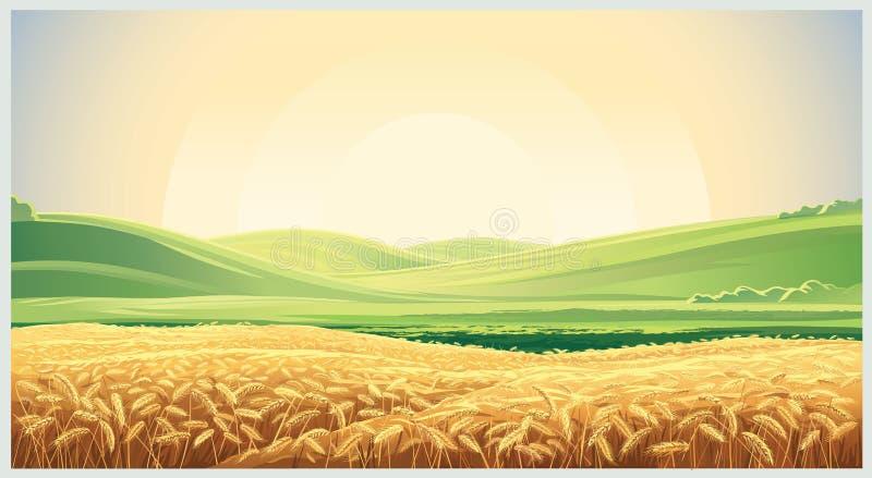 Lato krajobraz z śródpolną banatką royalty ilustracja