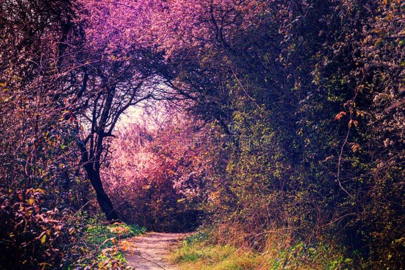 Lato krajobraz z footpath w magia ogródzie cloud jabłko kwiaty obszar łąkowego kształtuje charakter słońca drzewa obrazy royalty free