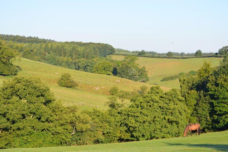 Lato krajobraz z koniem, North Yorkshire, UK fotografia stock