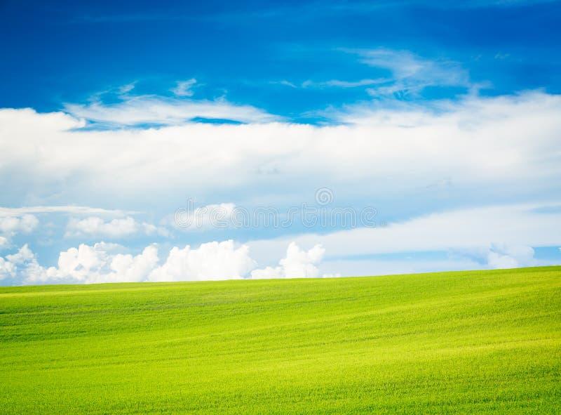 Lato krajobraz z zieleni niebieskim niebem i polem zdjęcia royalty free