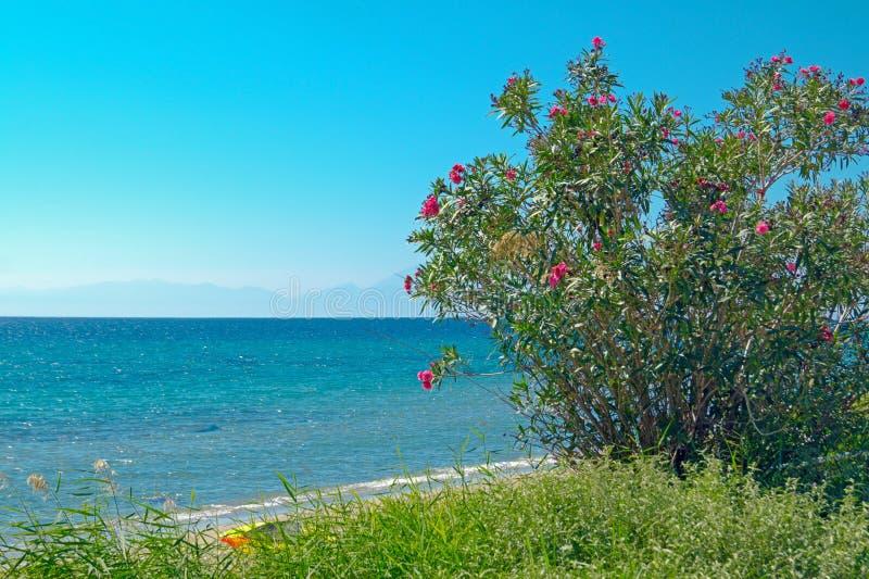 Lato kurort Halkidiki półwysep, Grecja obraz royalty free