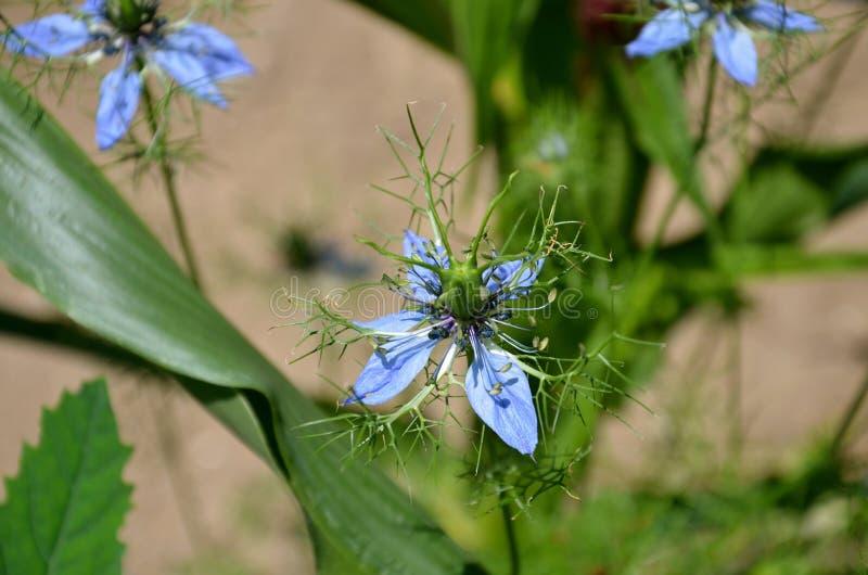 Lato kwiatów malutki dorośnięcie w Vermont obraz royalty free