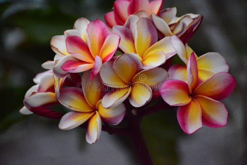 Lato kwiat obrazy stock
