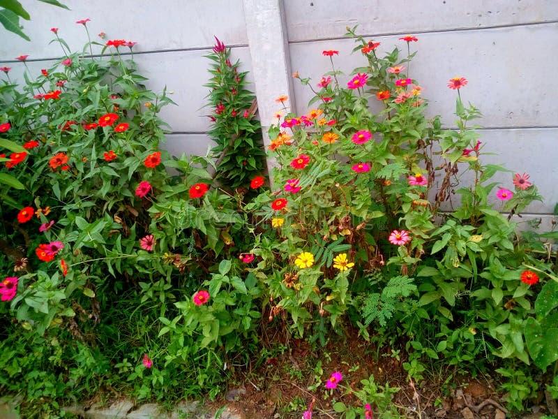Lato kwiat kwitnie piękno ślicznego obraz royalty free