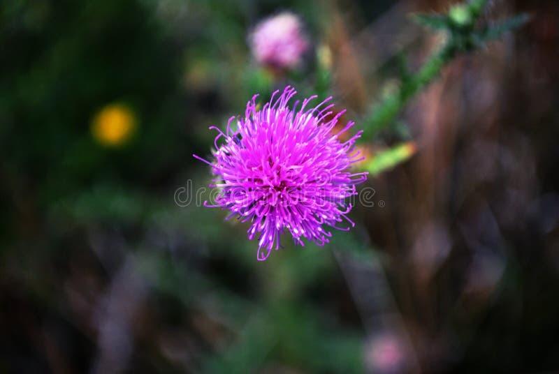 Lato kwiat w makro- fotografii obraz stock