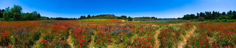 Lato kwiatu pole w Francja obrazy royalty free