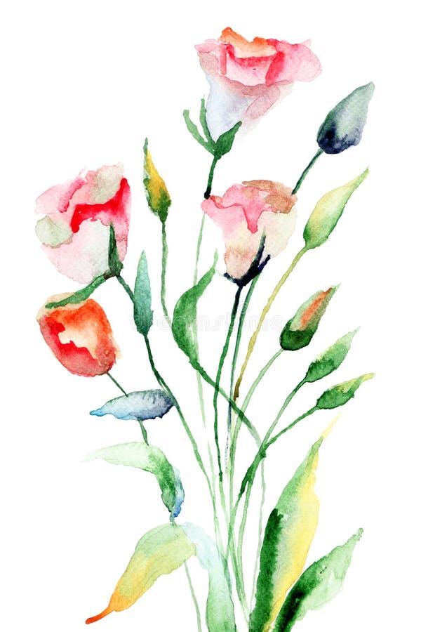 Lato Kwiaty Obraz Stock