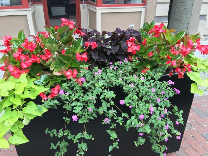 Lato kwiaty zdjęcie stock