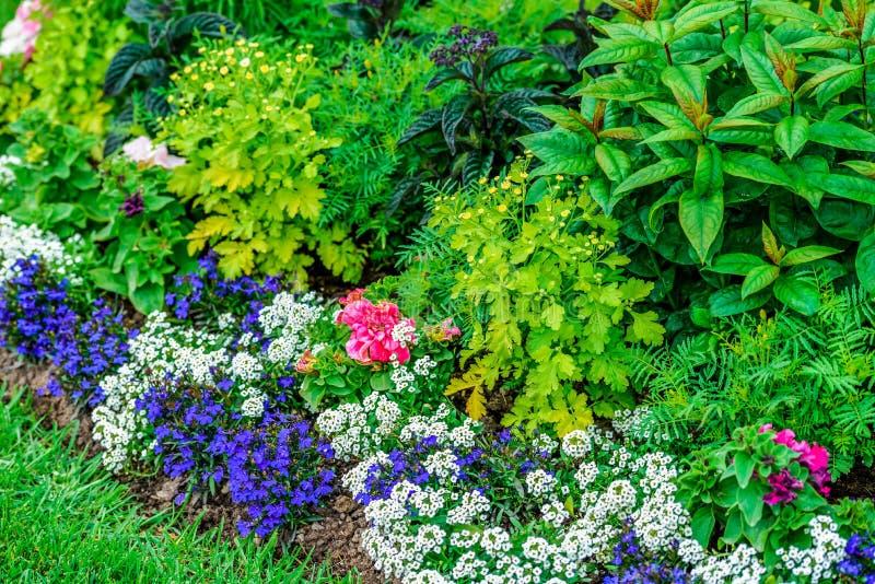 Lato kwiaty w miasto parku i trawa Kwitnący flowerbed z różnorodnymi roślinami zdjęcie stock