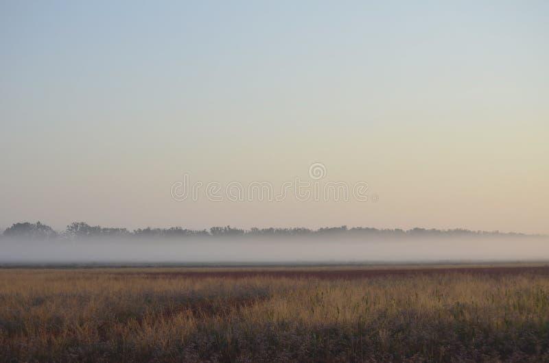 Lato mgła nad polem dzicy kwiaty fotografia stock