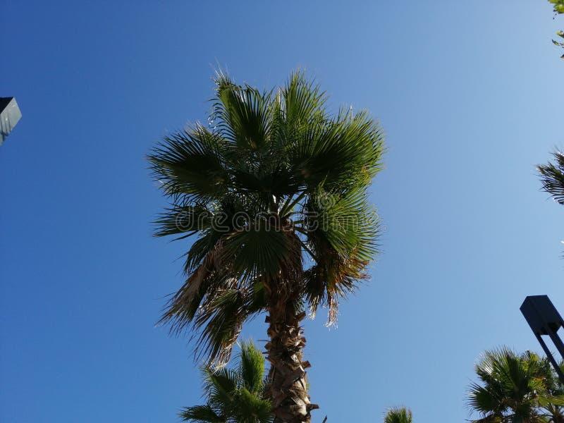 Lato na palmtopie Antalya obrazy royalty free