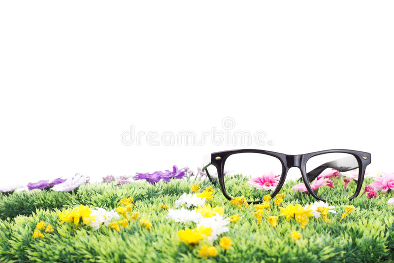Lato na pięknej kwiat łące! zdjęcia stock