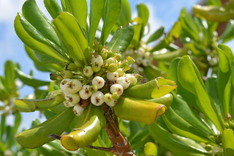 Lato Nabrzeżna roślina zdjęcia stock