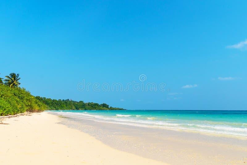Lato natury scena Tropikalna plaża z morzem, niebieskim niebem i drzewkami palmowymi, zdjęcie stock