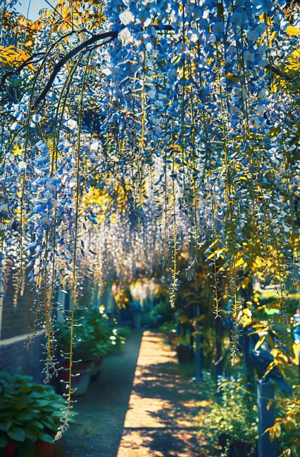 Lato ogródu łuk obraz stock