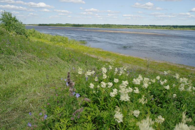 Lato Północny krajobraz, Pinega rzeka, Arkhangelsk region fotografia stock