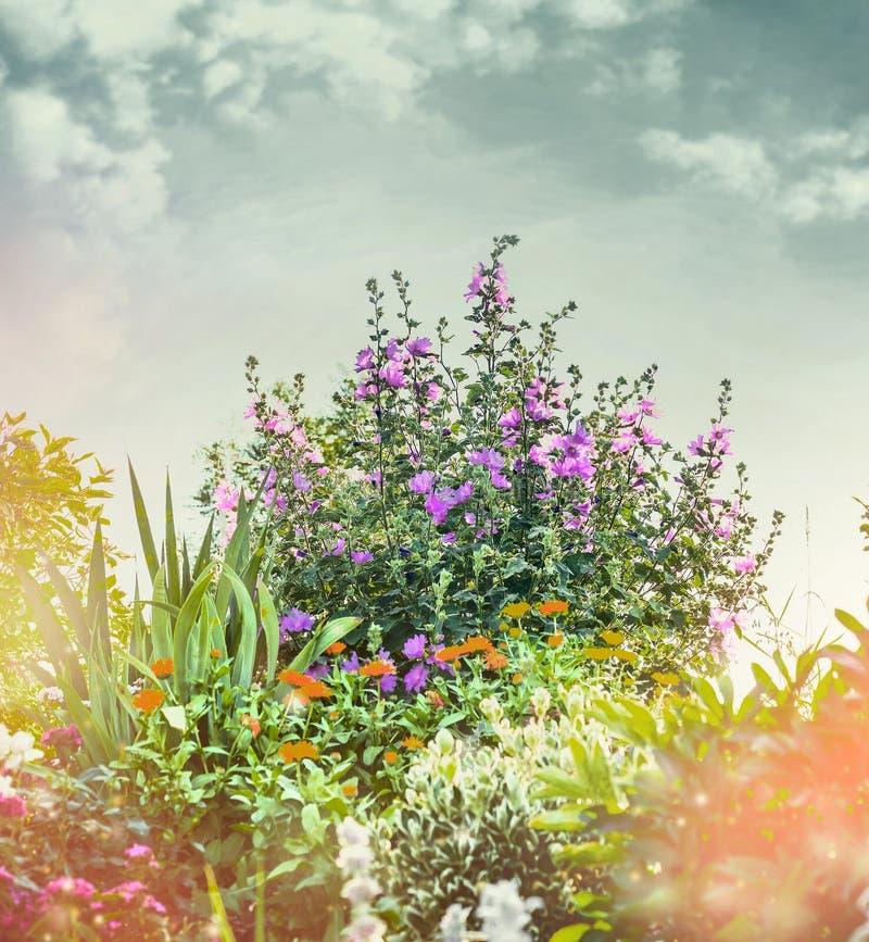 Lato park z ślazu krzakiem lub ogród, natury tło zdjęcia royalty free